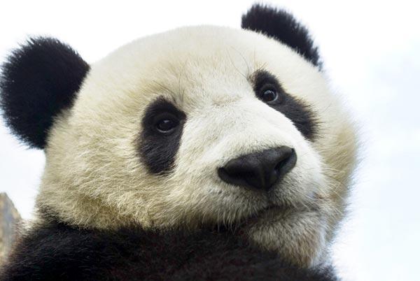 02_panda-cub.jpg